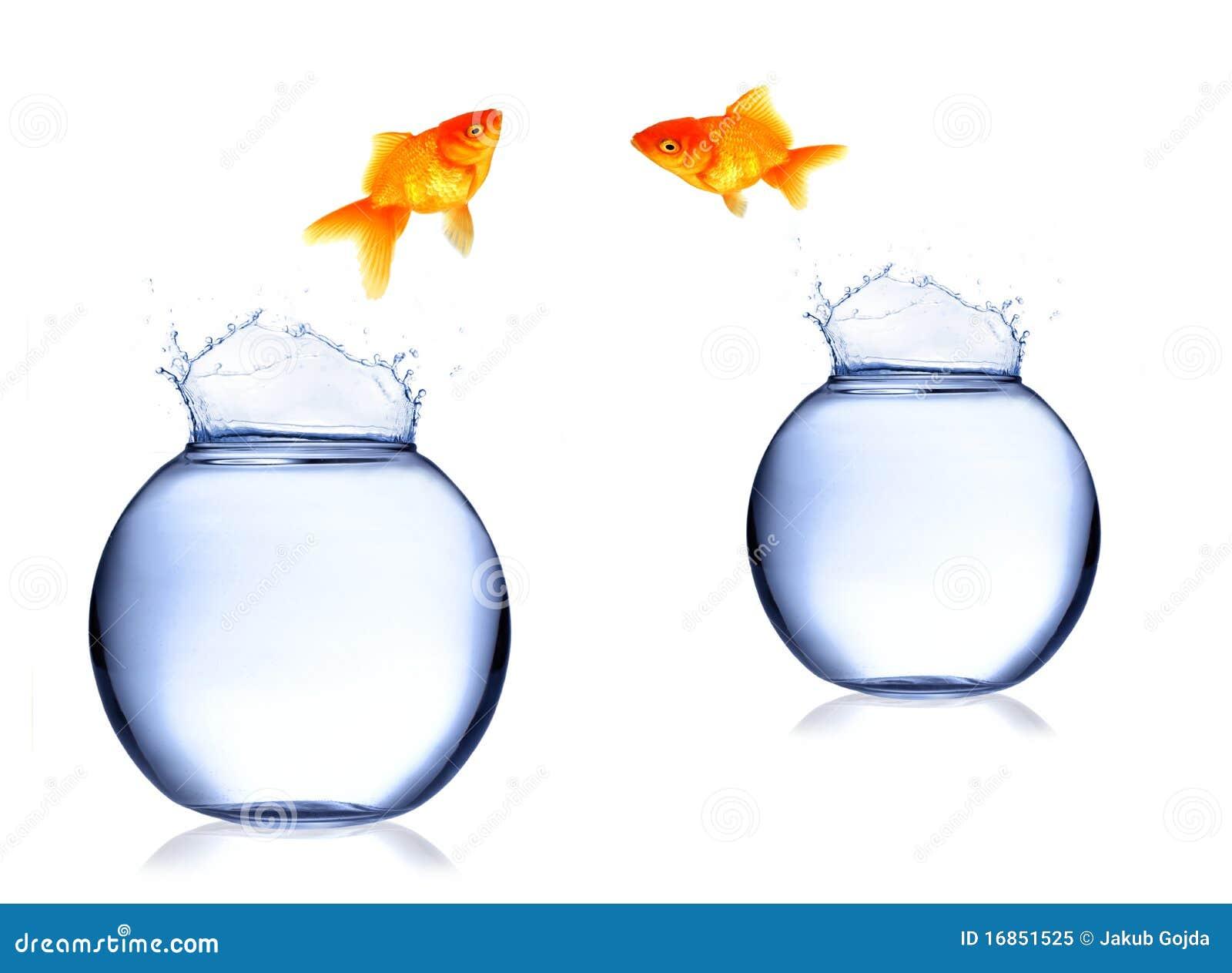 Troca dos peixes