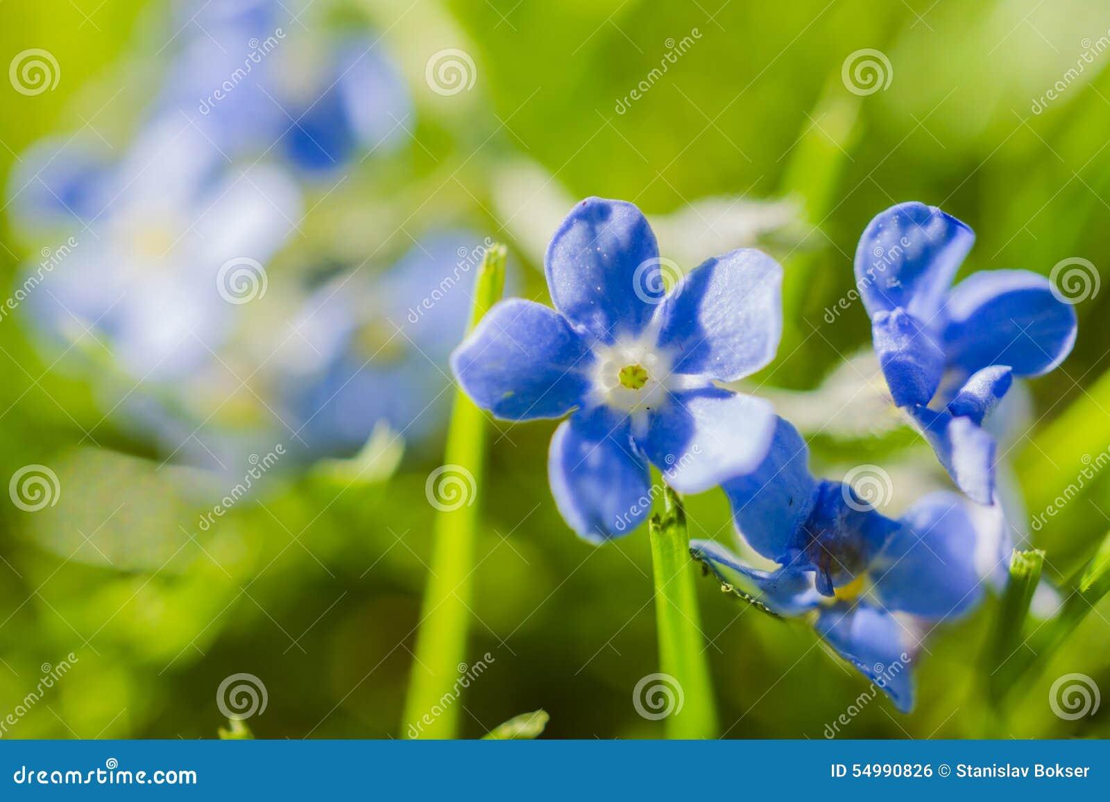 Trochę błękitny kwiat