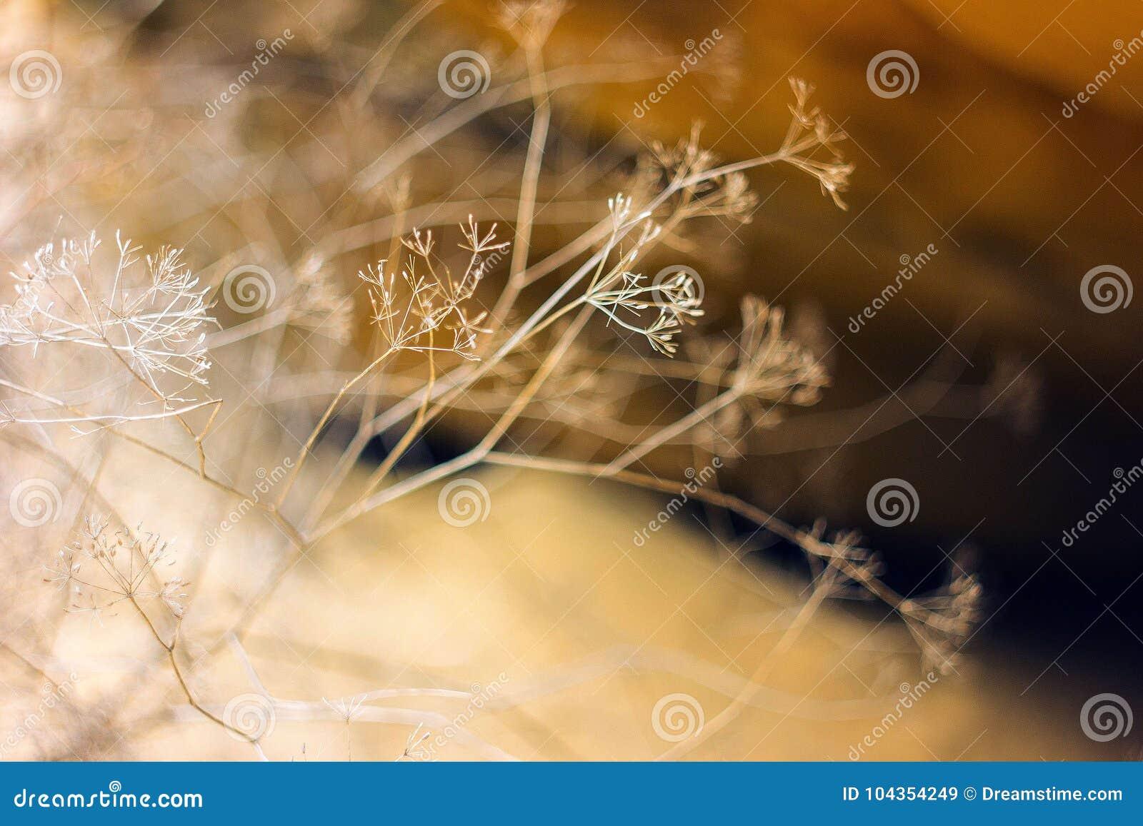 Trockene Blumen auf einem braunen Hintergrund Hintergrund