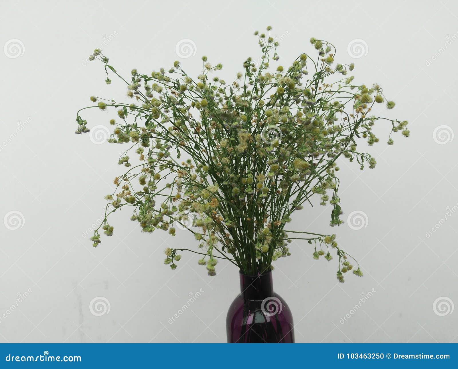 Trockene Blumen in einer Flasche