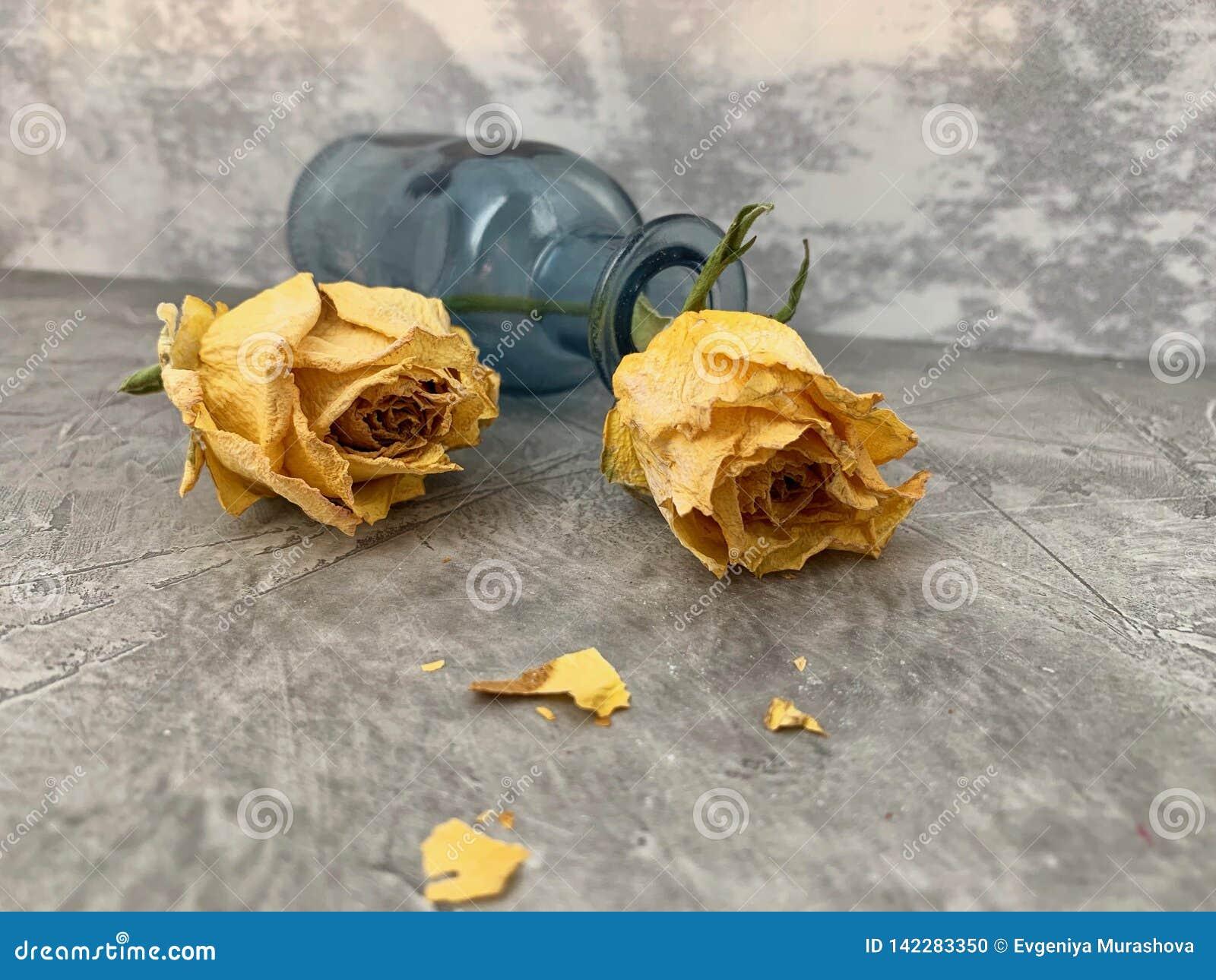Trockene, gelbe Rosen