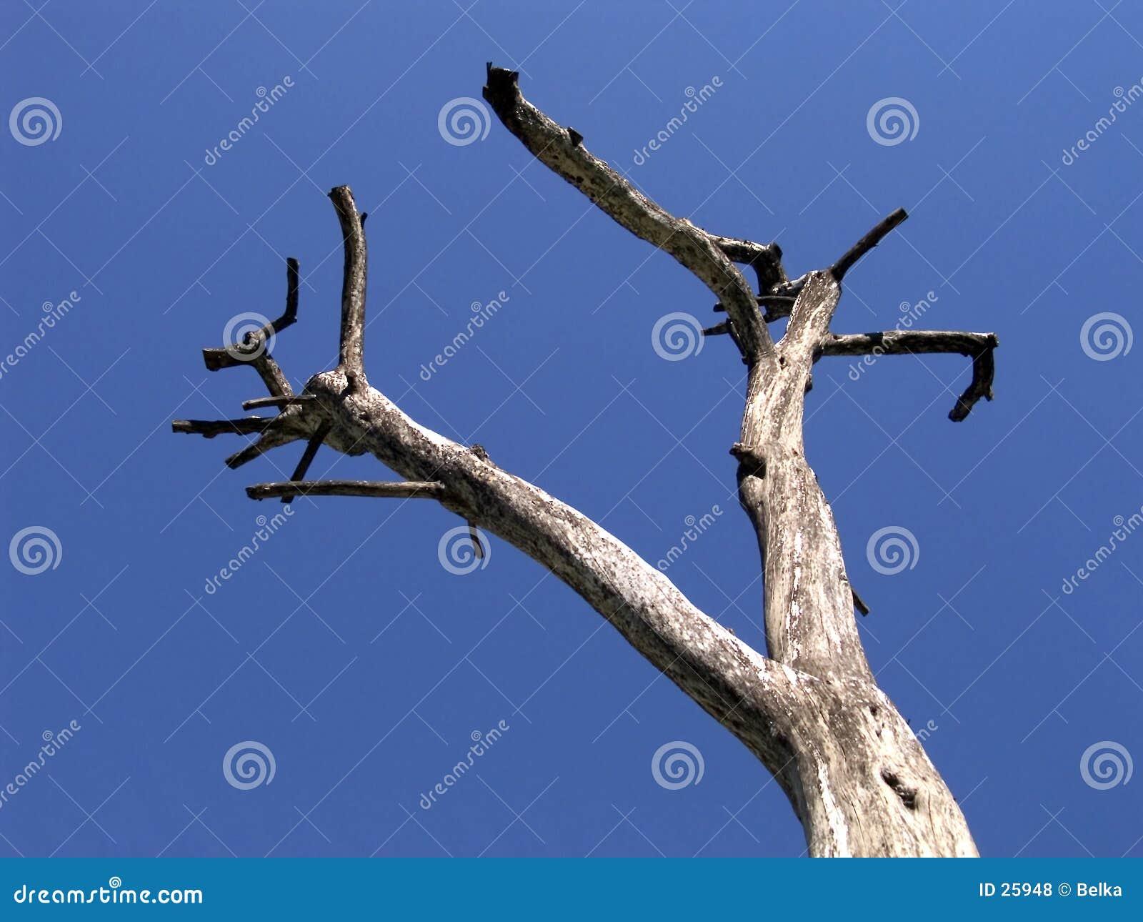 Trockener Baum