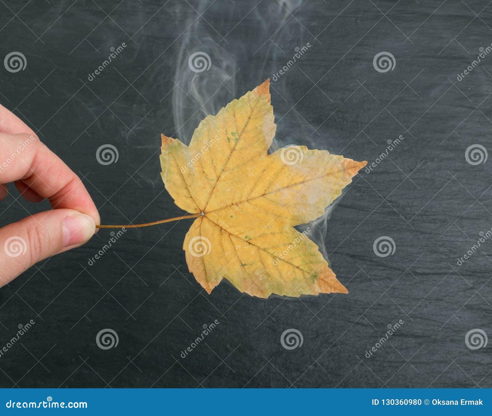Trockenes Blatt mit Rauche auf schwarzem Steinhintergrund