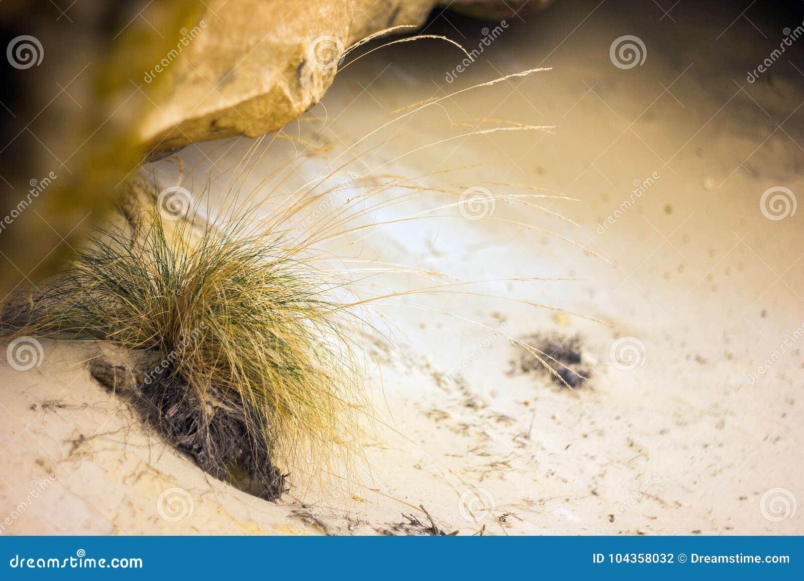 Trockenes Gras auf dem Sand