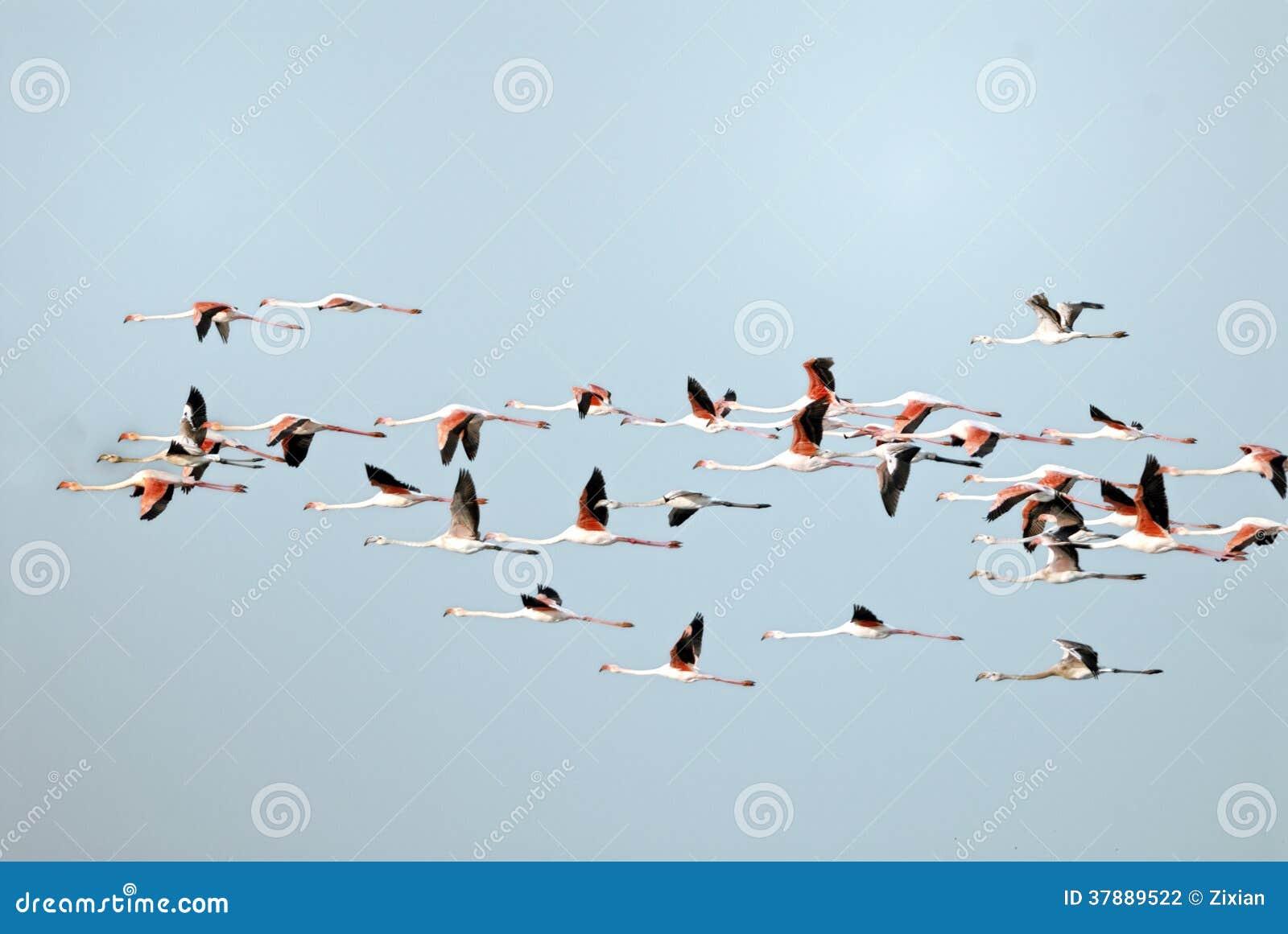 Troep van flamingo s