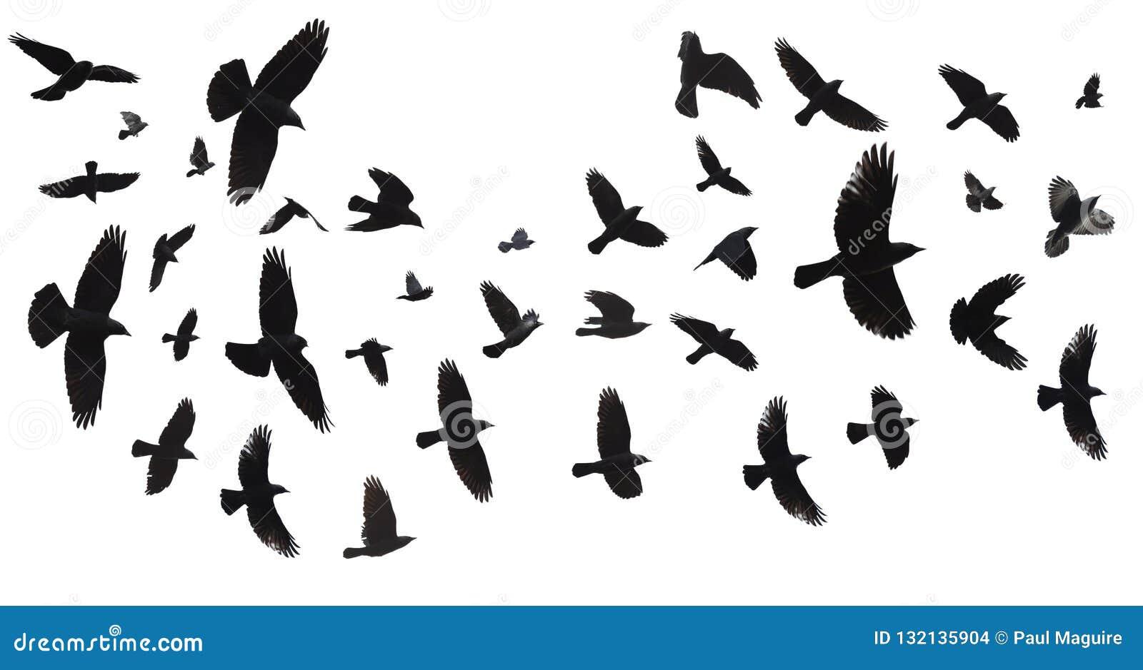 Troep van geïsoleerde vogels