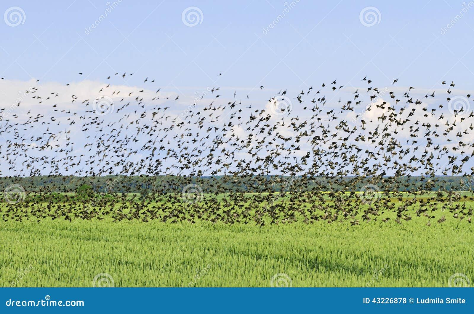 Troep van vogel