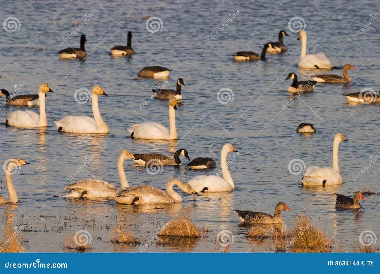 Troep van vogels