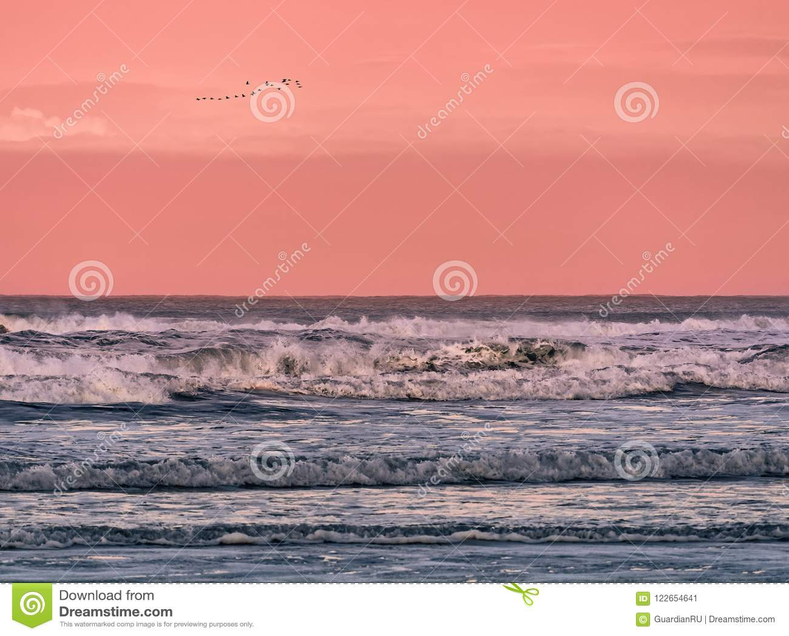 Troep van vogels die in de hemel over het overzees bij dageraad vliegen