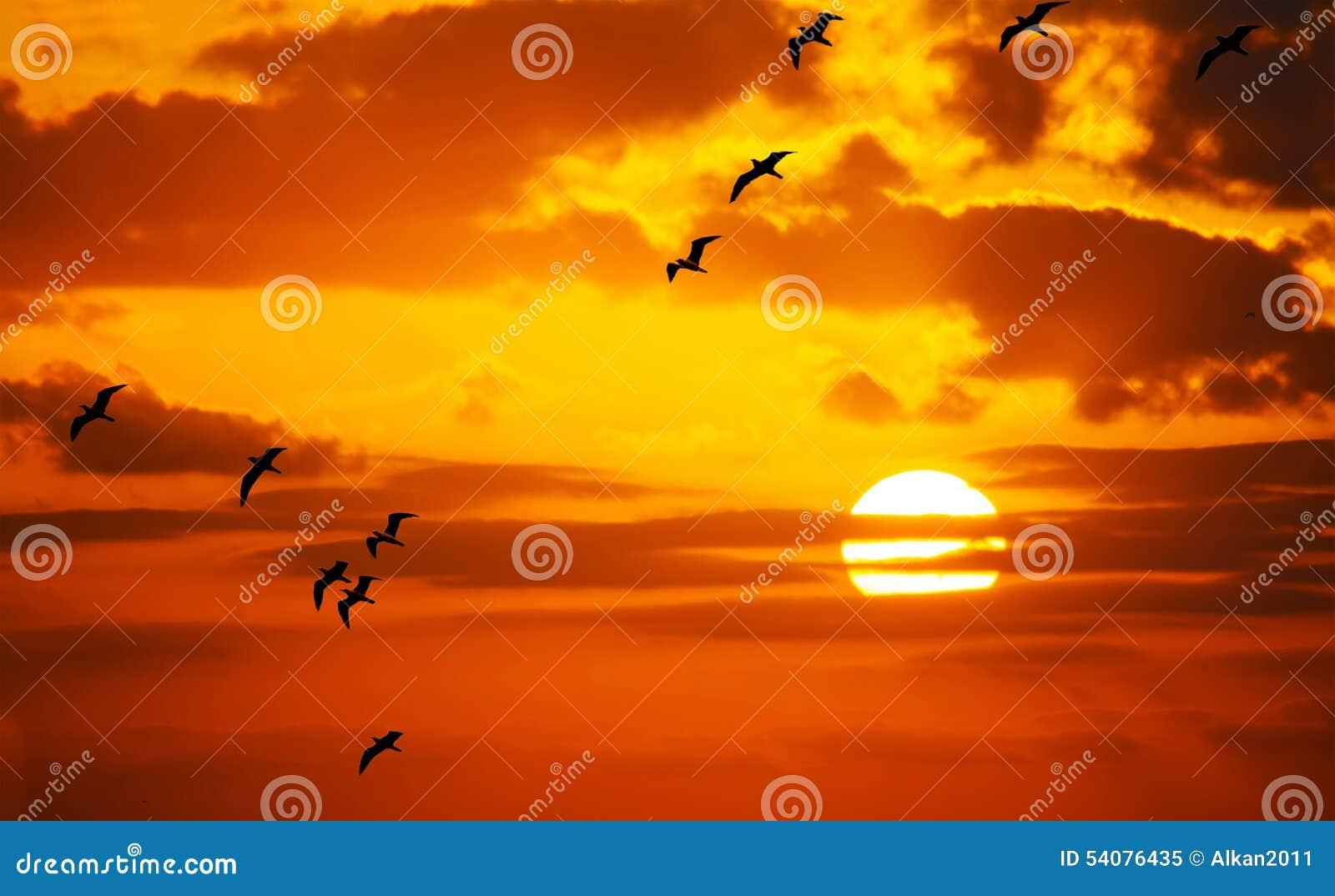 Troep van zeemeeuwen die in de zon vliegen