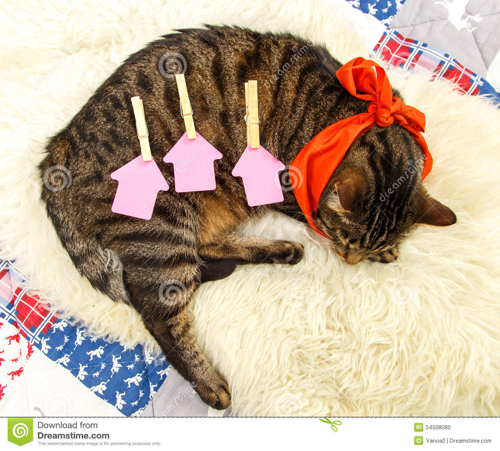 Trois calibres de papier pour des lettres au dos d un chaton de sommeil