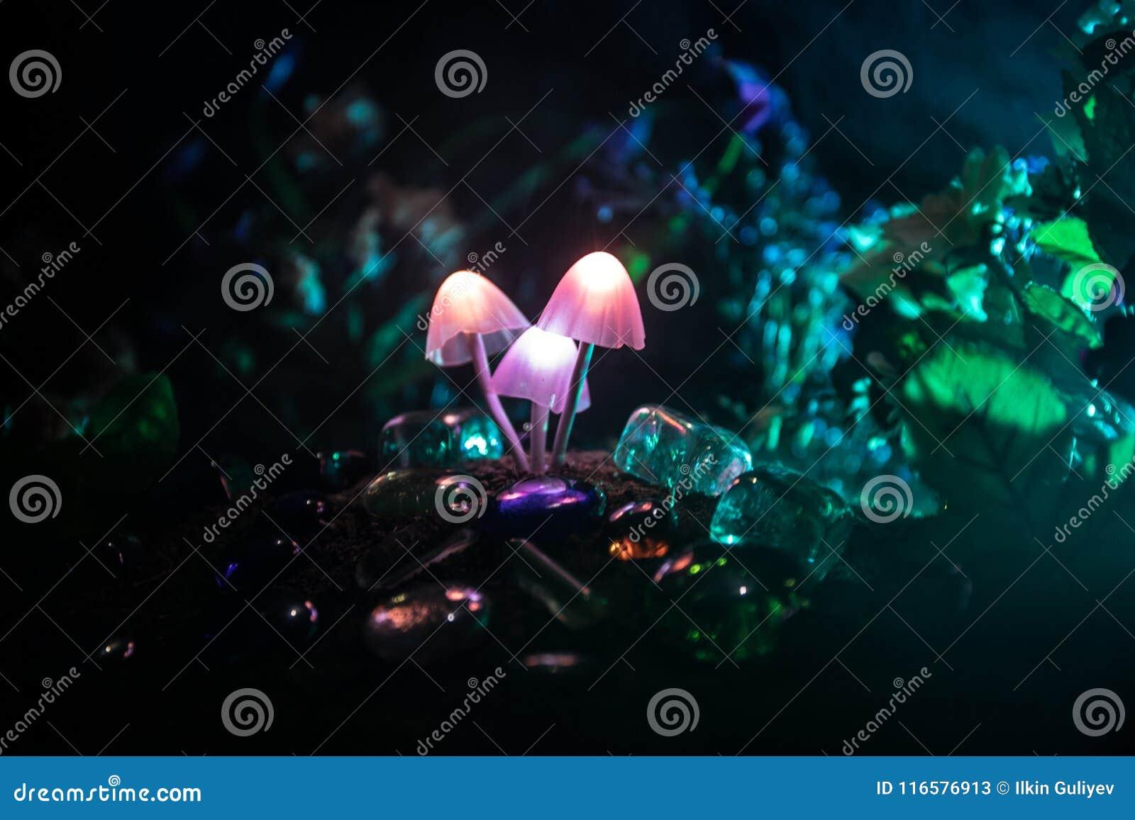 Trois champignons rougeoyants d imagination en plan rapproché foncé de forêt de mystère Le beau macro tir du champignon magique o
