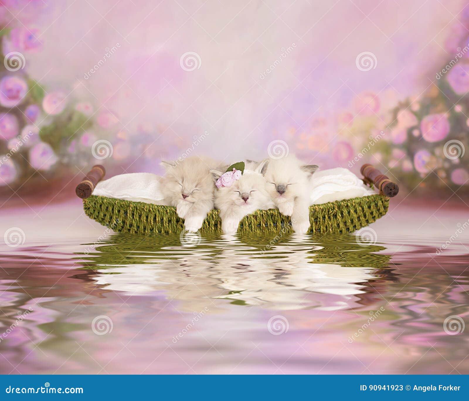 Trois chatons adorables dans un bateau