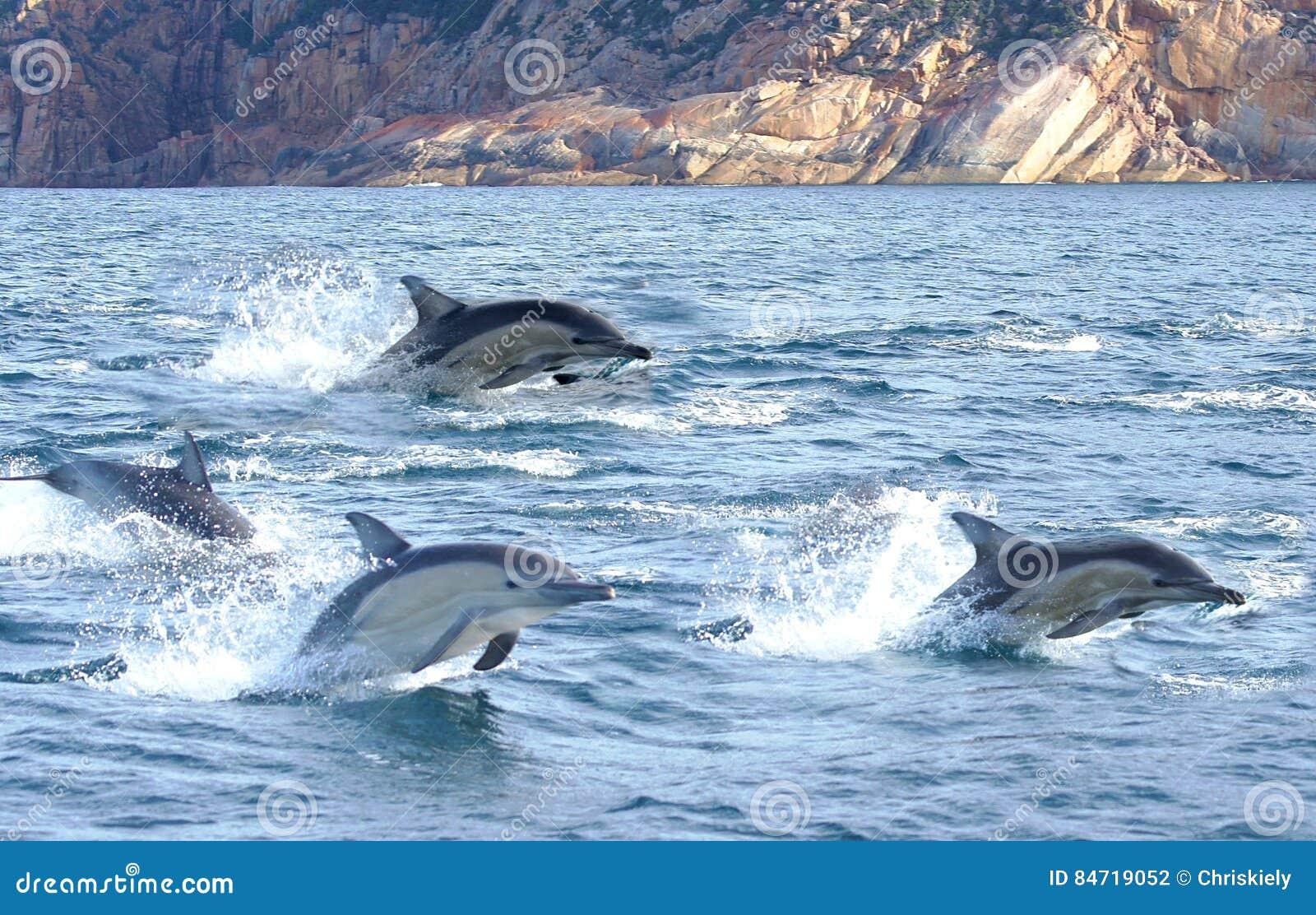 Trois dauphins