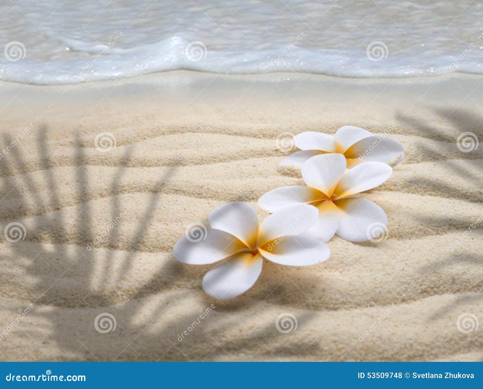 trois fleurs de tiare sur la plage photo stock image du nature paume 53509748. Black Bedroom Furniture Sets. Home Design Ideas
