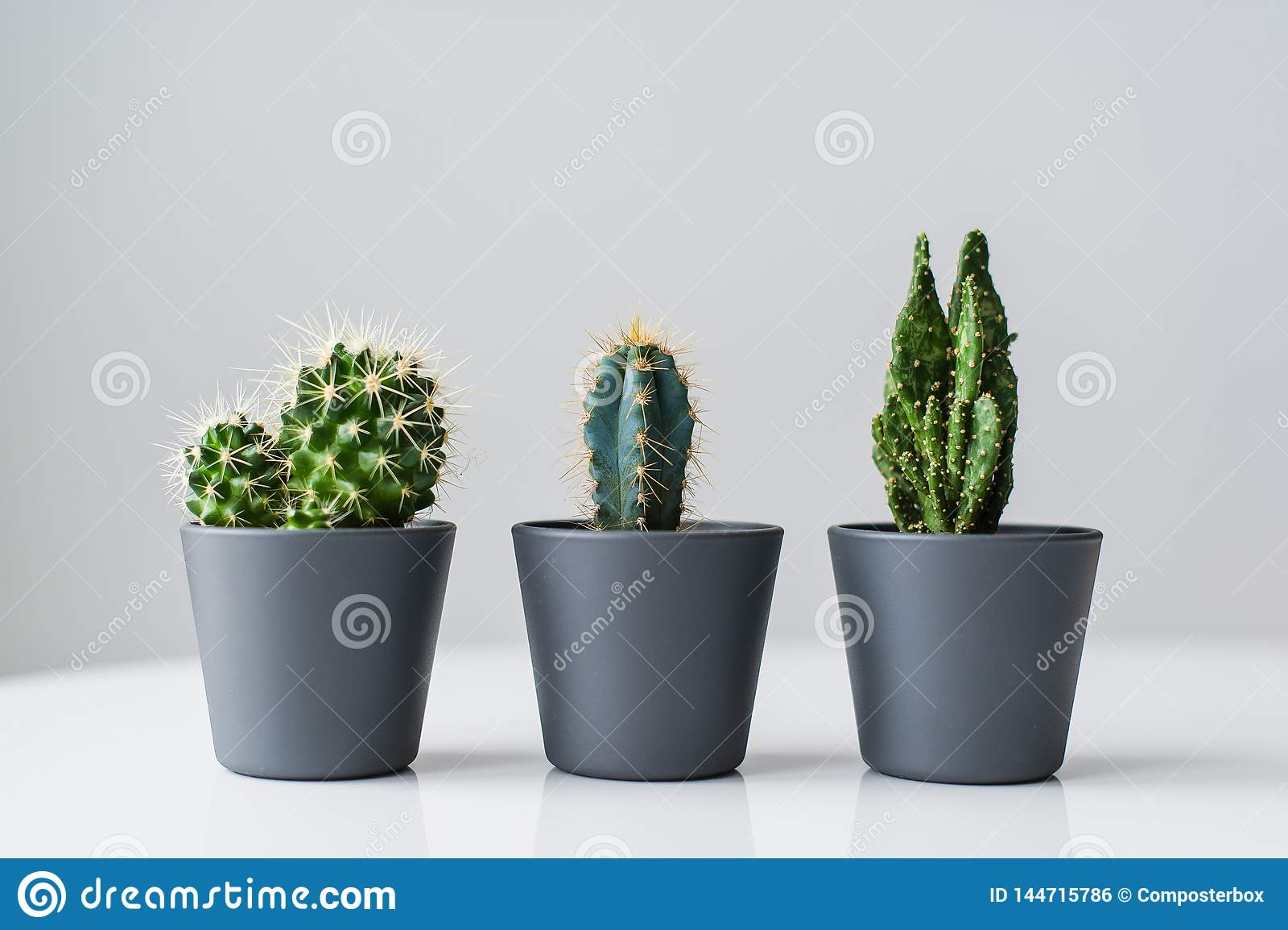 Trois genres de cactus verts sur un fond gris r