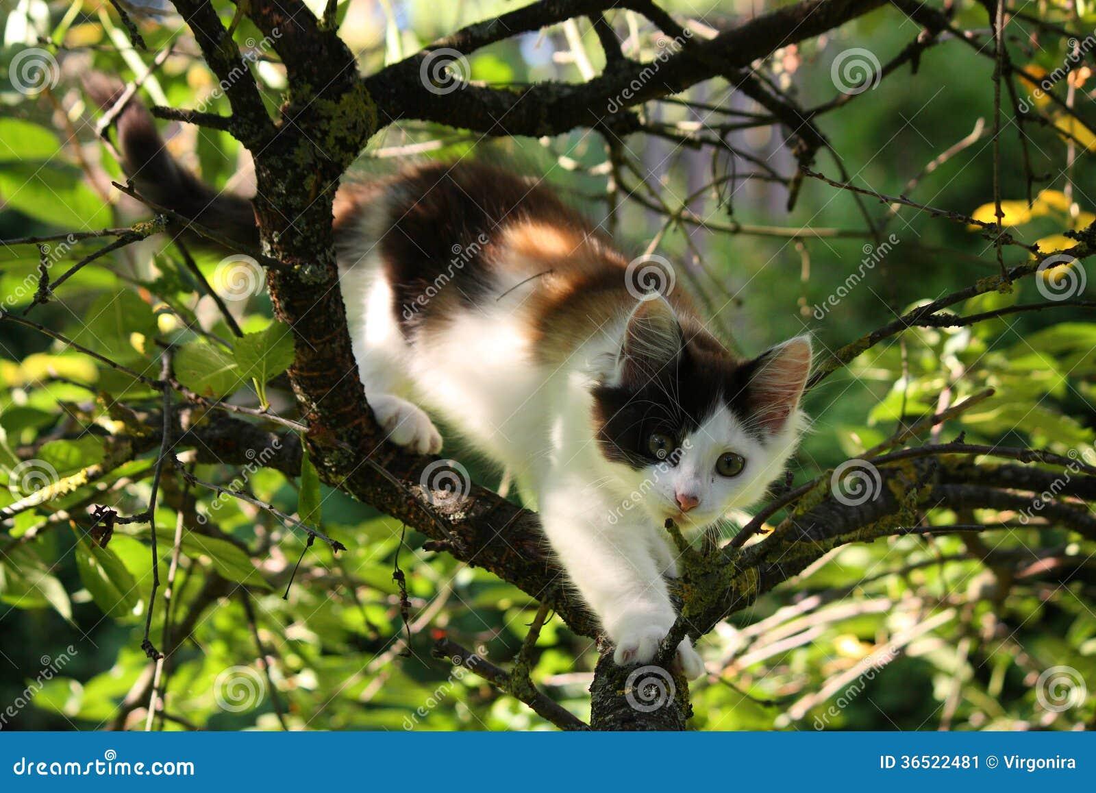 Trois mignons ont coloré le chaton rongeant sur la branche d arbre