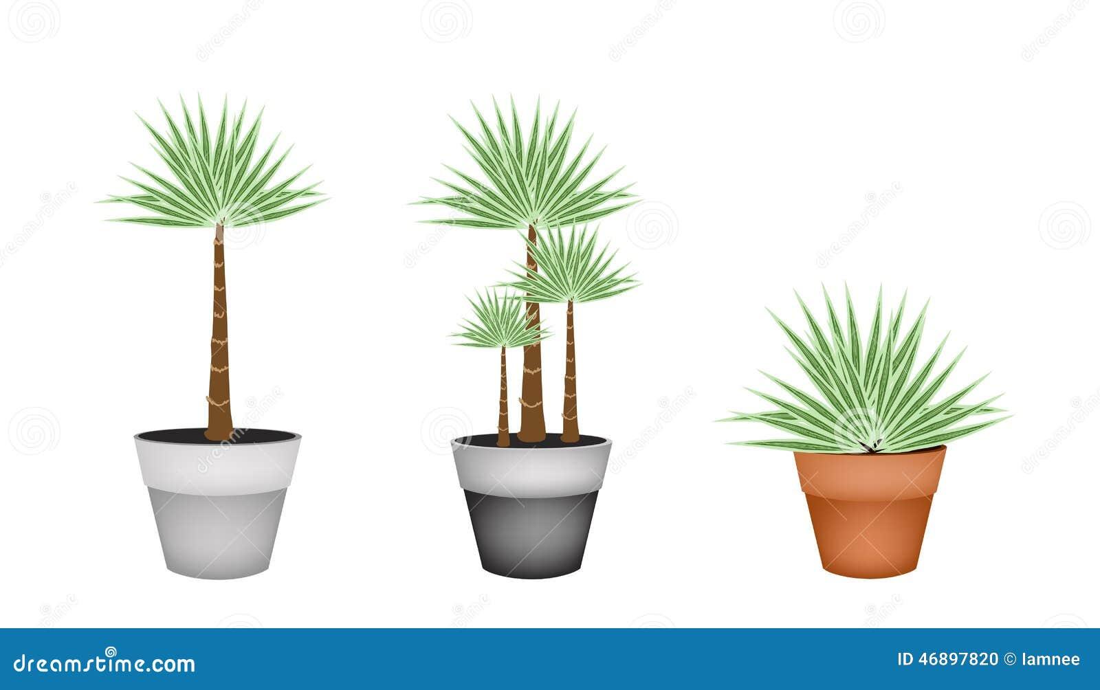 trois palmiers dans le pot de fleur en c ramique illustration de vecteur image 46897820. Black Bedroom Furniture Sets. Home Design Ideas