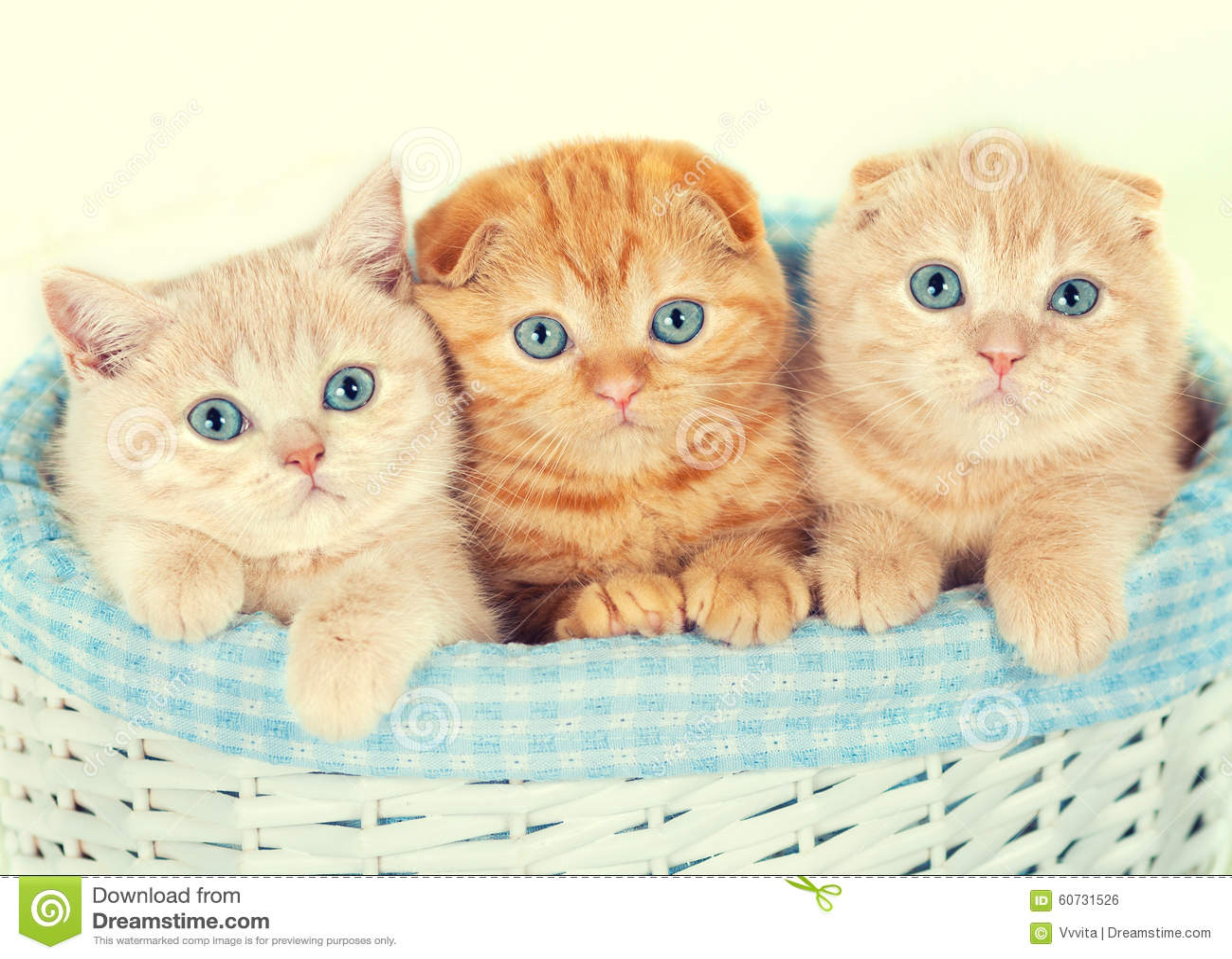 Trois petits chatons