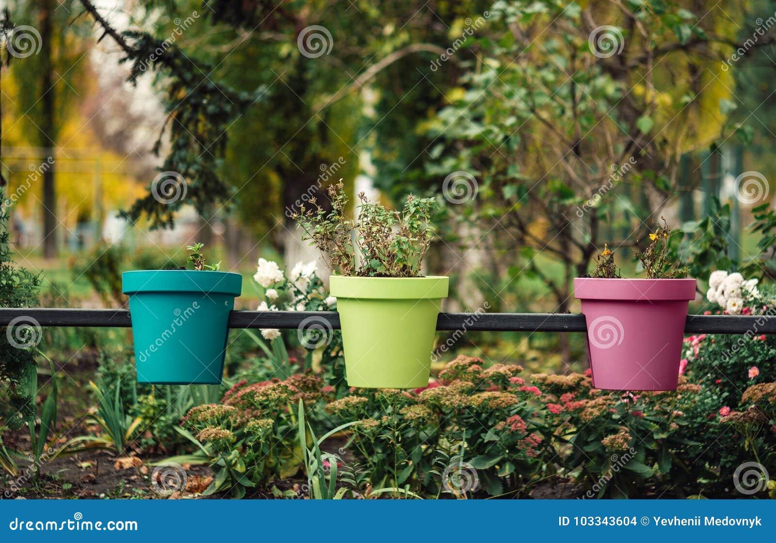 Trois pots de fleurs multicolores sur la rue