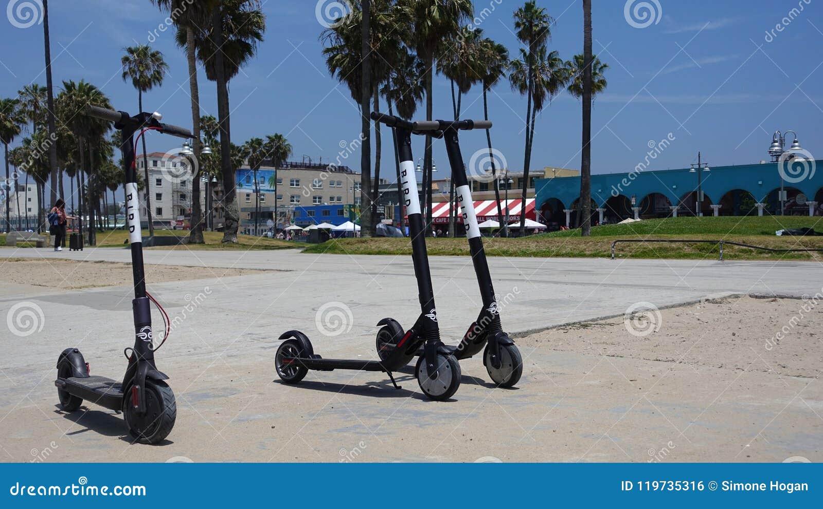 Trois scooters d OISEAU sur la plage de Venise