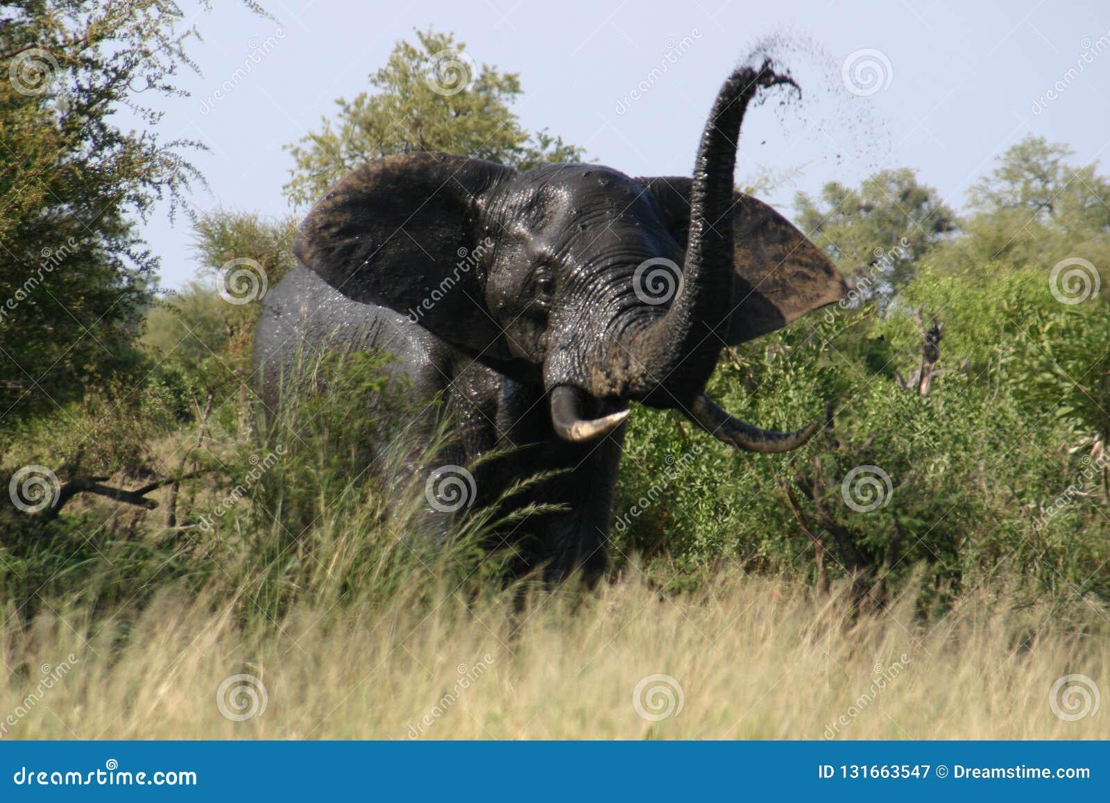 Trompeta enojada del elefante