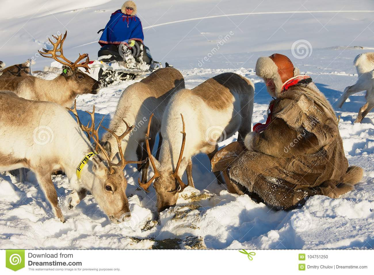 Saami Men Bring Food To Reindeers In Deep Snow Winter In