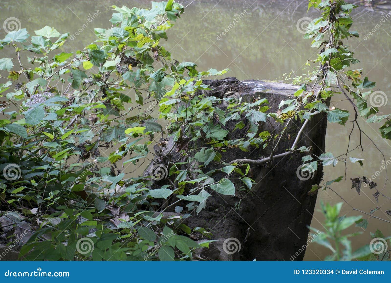 Tronçon avec de l eau les feuilles et