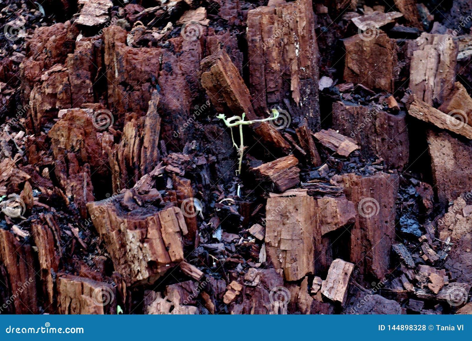 Tronçon cassé dans la forêt dans beaucoup de différents morceaux