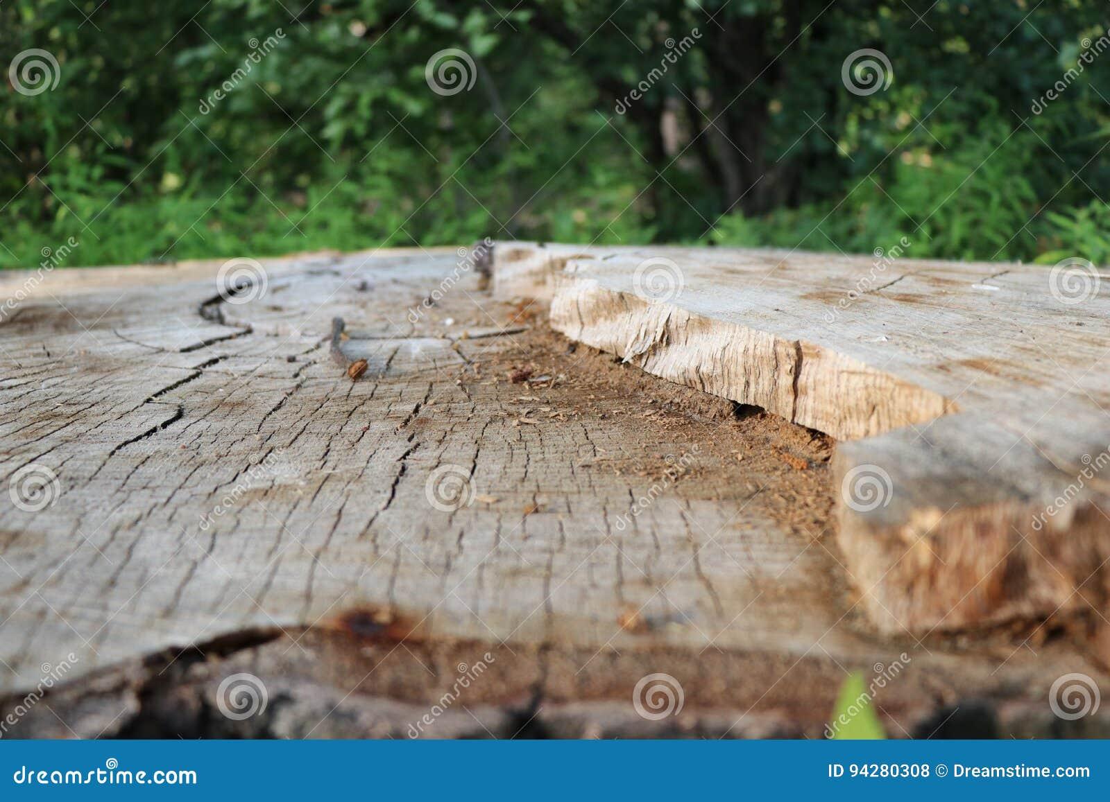 Tronçon d arbre