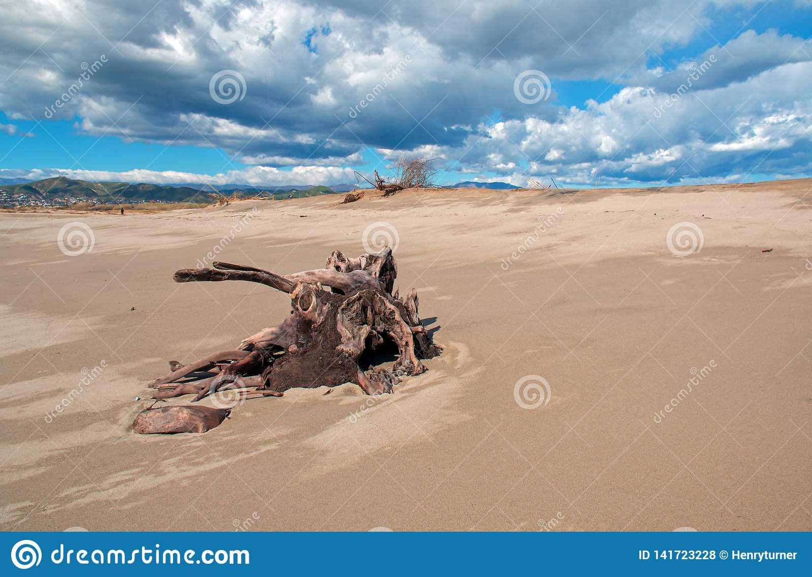 Tronçon d arbre de bois de flottage avec des racines sous des cumulus sur la plage de Ventura en Californie Etats-Unis