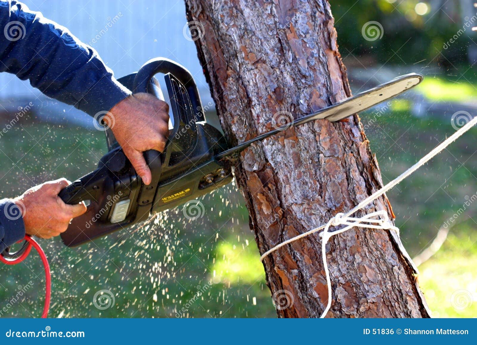 Download Tronçonneuse photo stock. Image du coupure, divisez, arbre - 51836