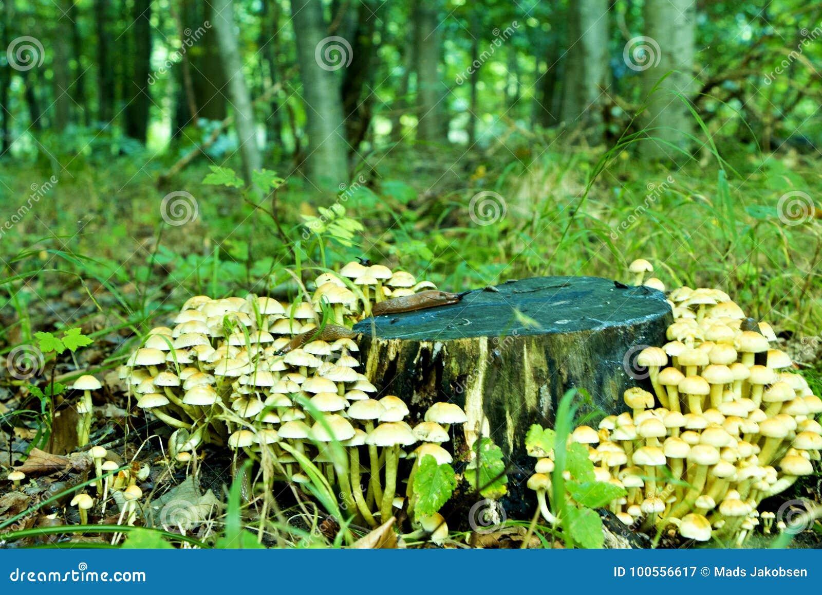 Tronc d arbre avec des champignons