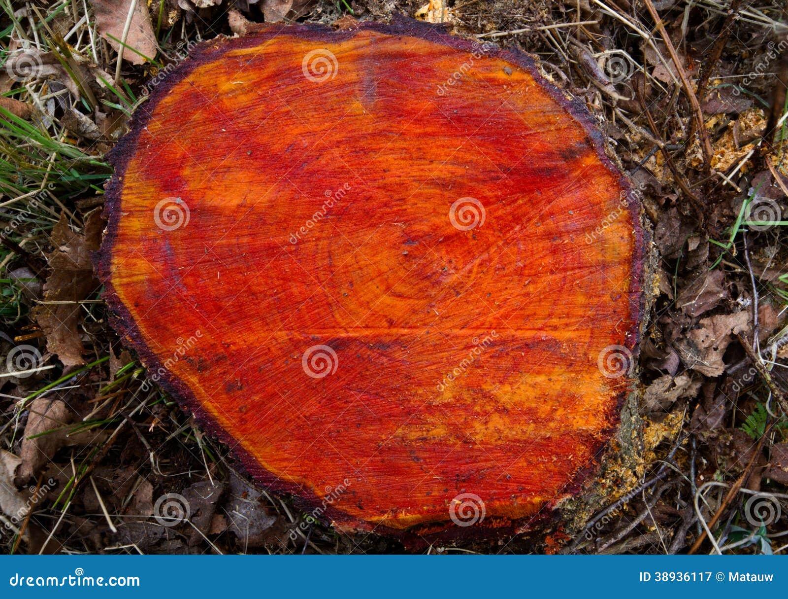 Tronc d 39 arbre d 39 aulne noir photo stock image 38936117 - Aulne bois de chauffage ...