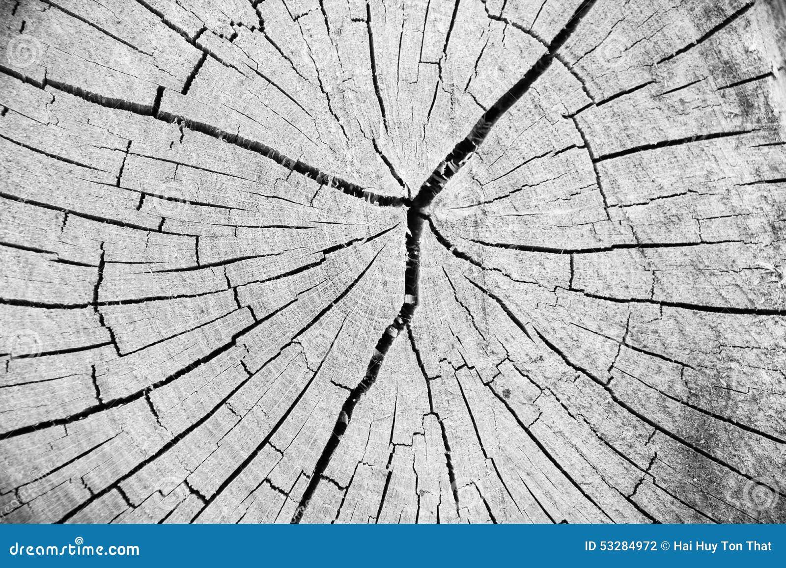 tronc d 39 arbre en bois de coupe de texture photo stock image du chemin e vieillissement 53284972. Black Bedroom Furniture Sets. Home Design Ideas