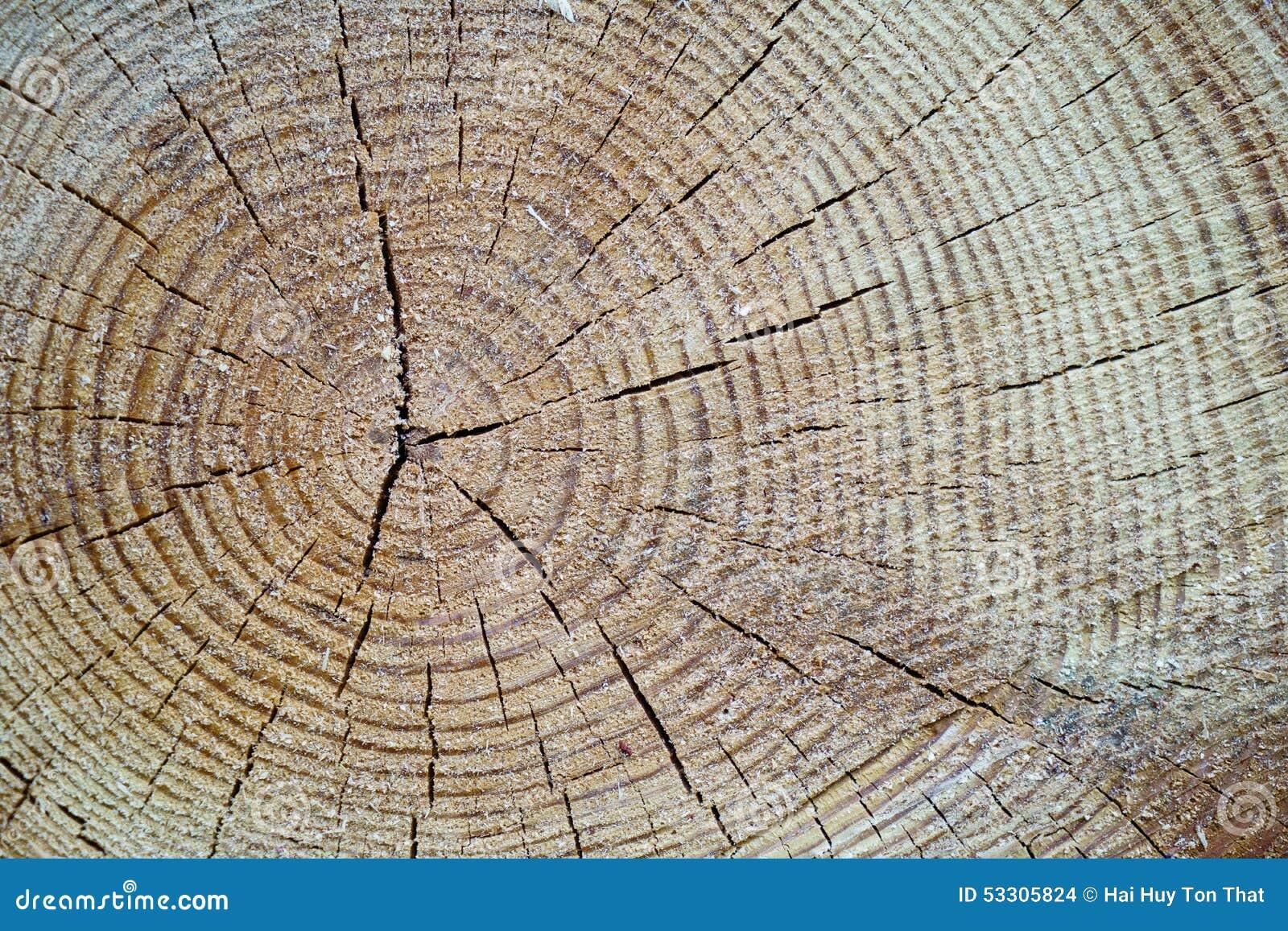 tronc d 39 arbre en bois de coupe de texture photo stock image du brun tron onneuse 53305824. Black Bedroom Furniture Sets. Home Design Ideas