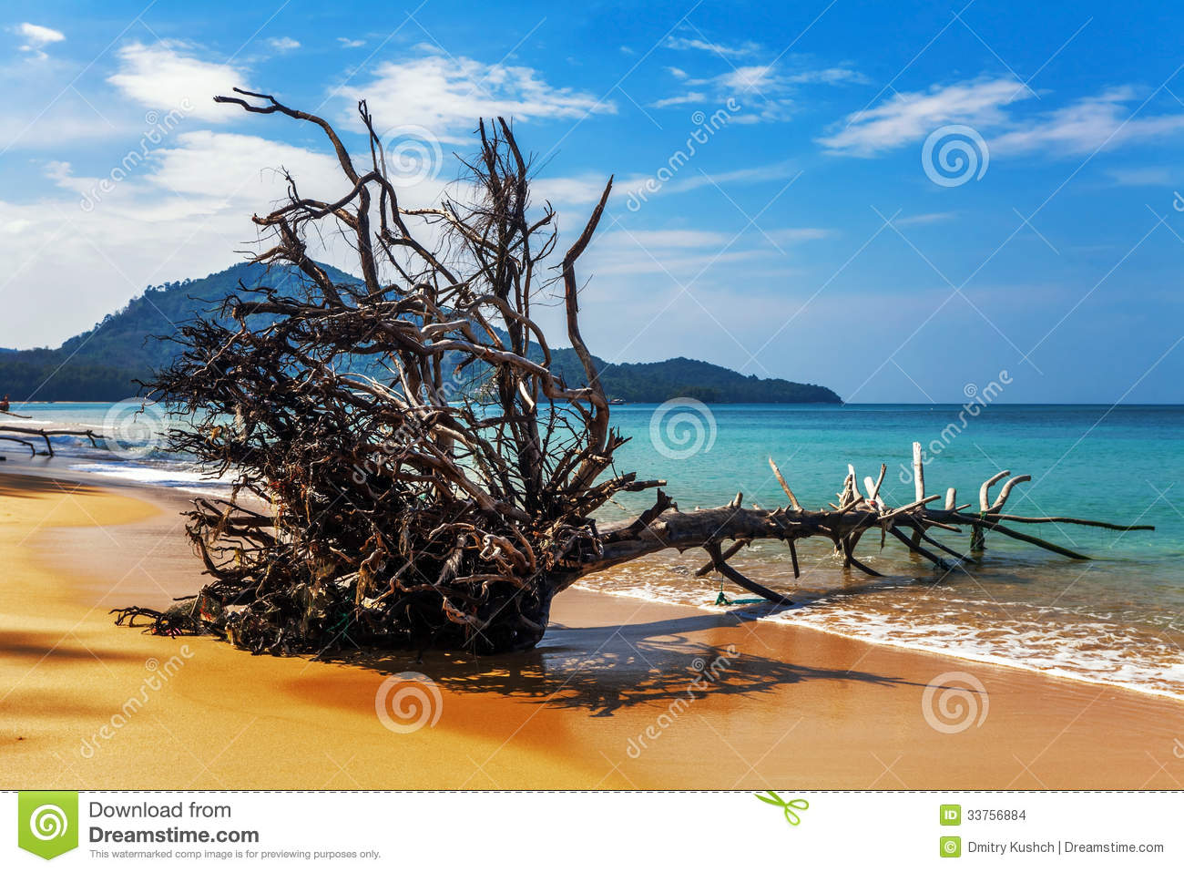 tronc d 39 arbre mort sur la plage photo stock image du saison ext rieur 33756884. Black Bedroom Furniture Sets. Home Design Ideas