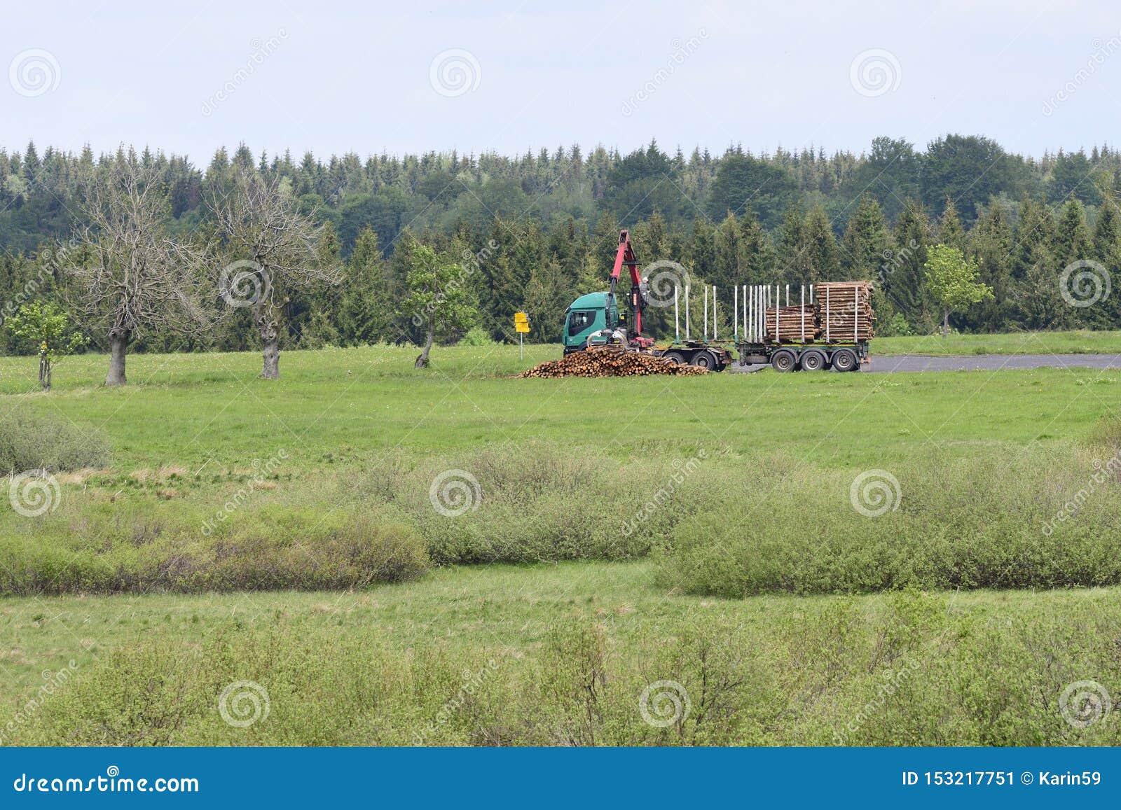 Tronchi attillati nella foresta in Boemia