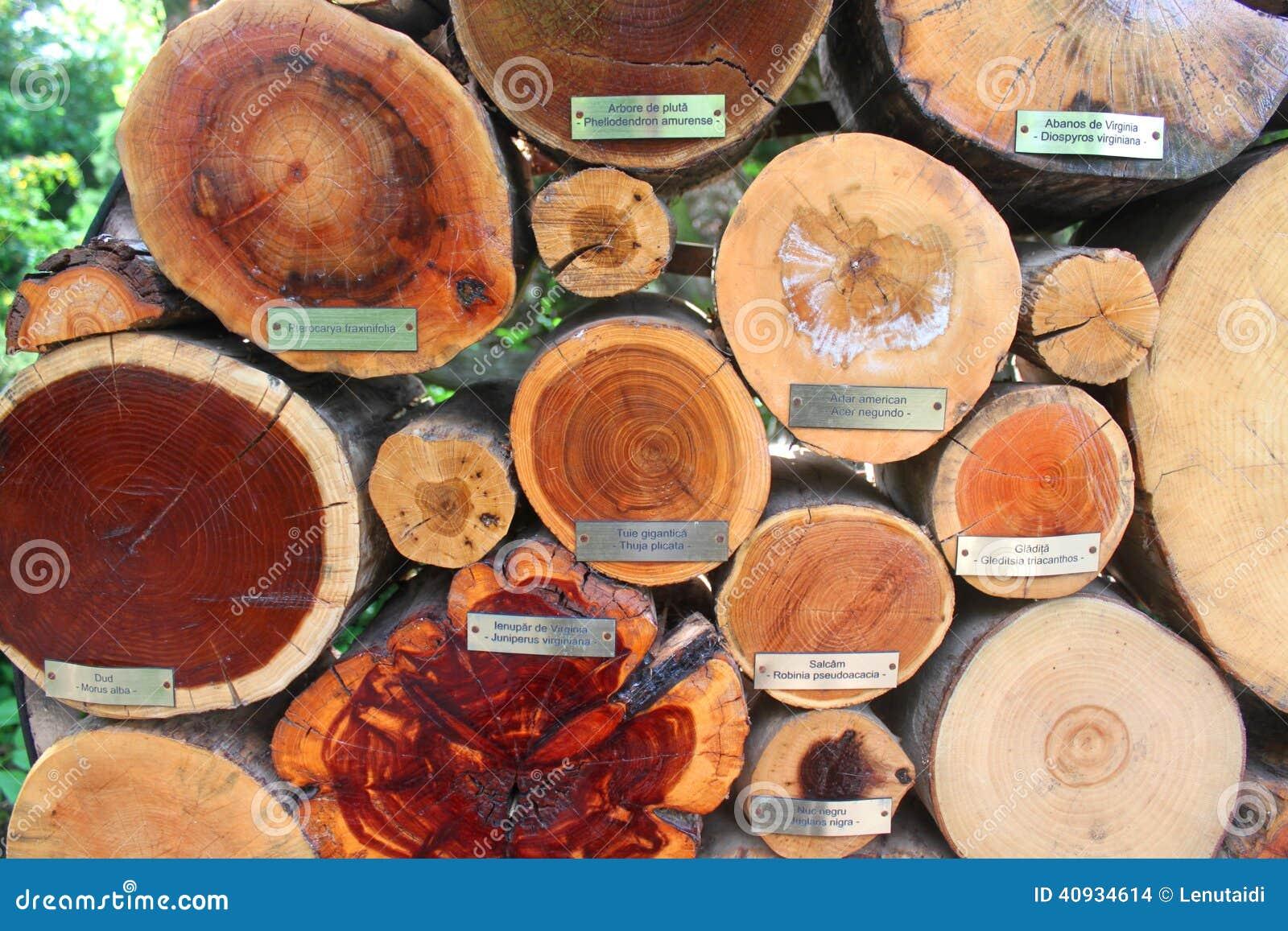 Tronchi del taglio degli alberi