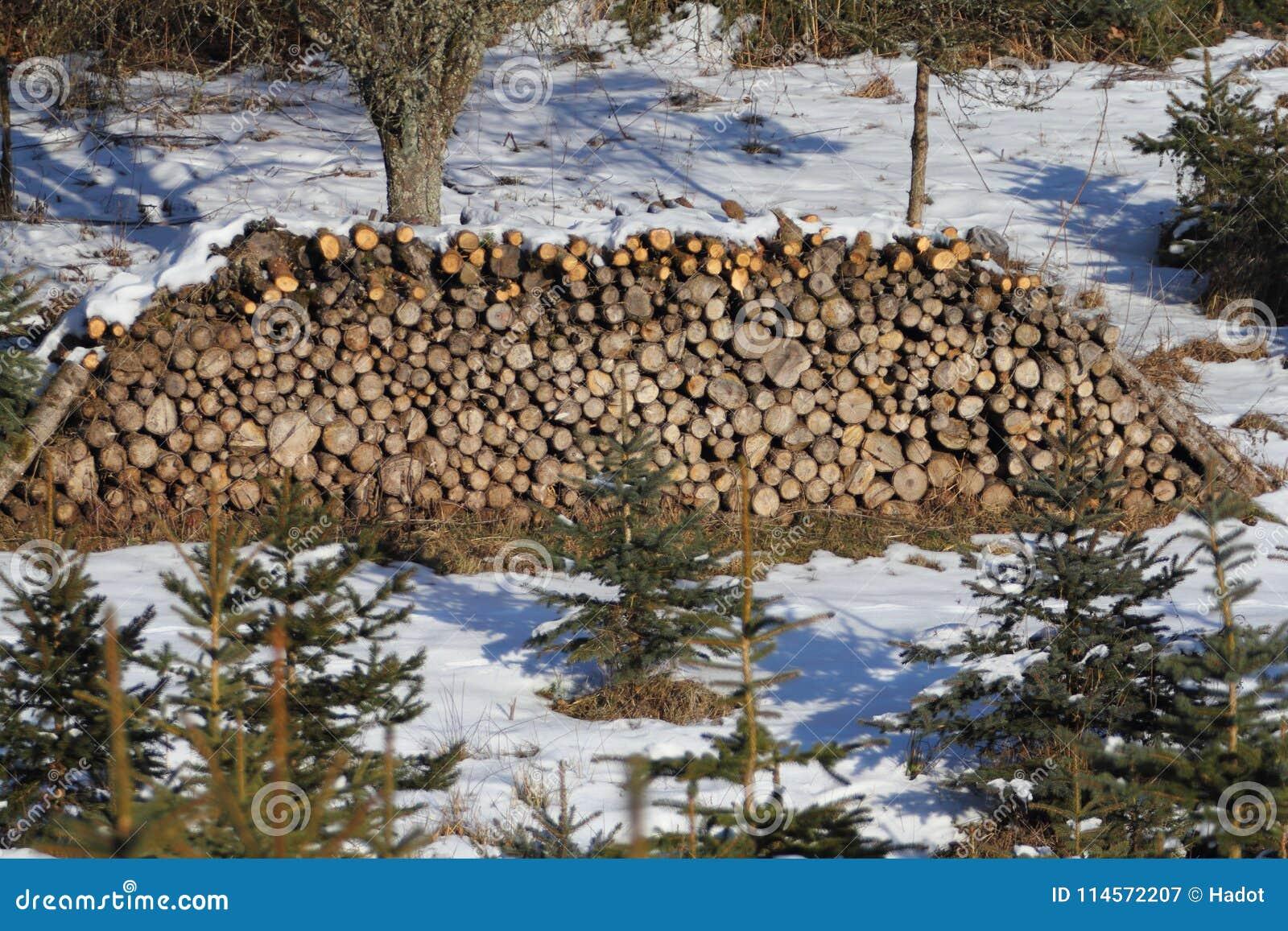 Tronchi di albero