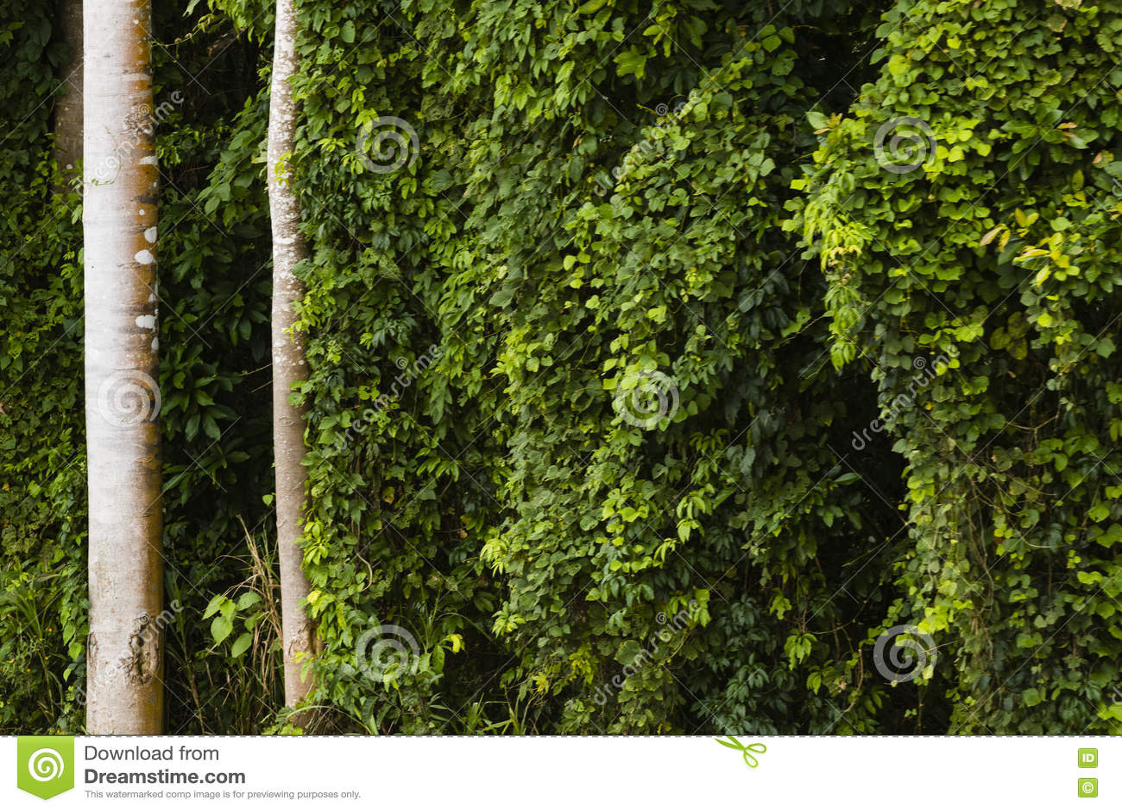 Tronchi di albero e cespugli verdi