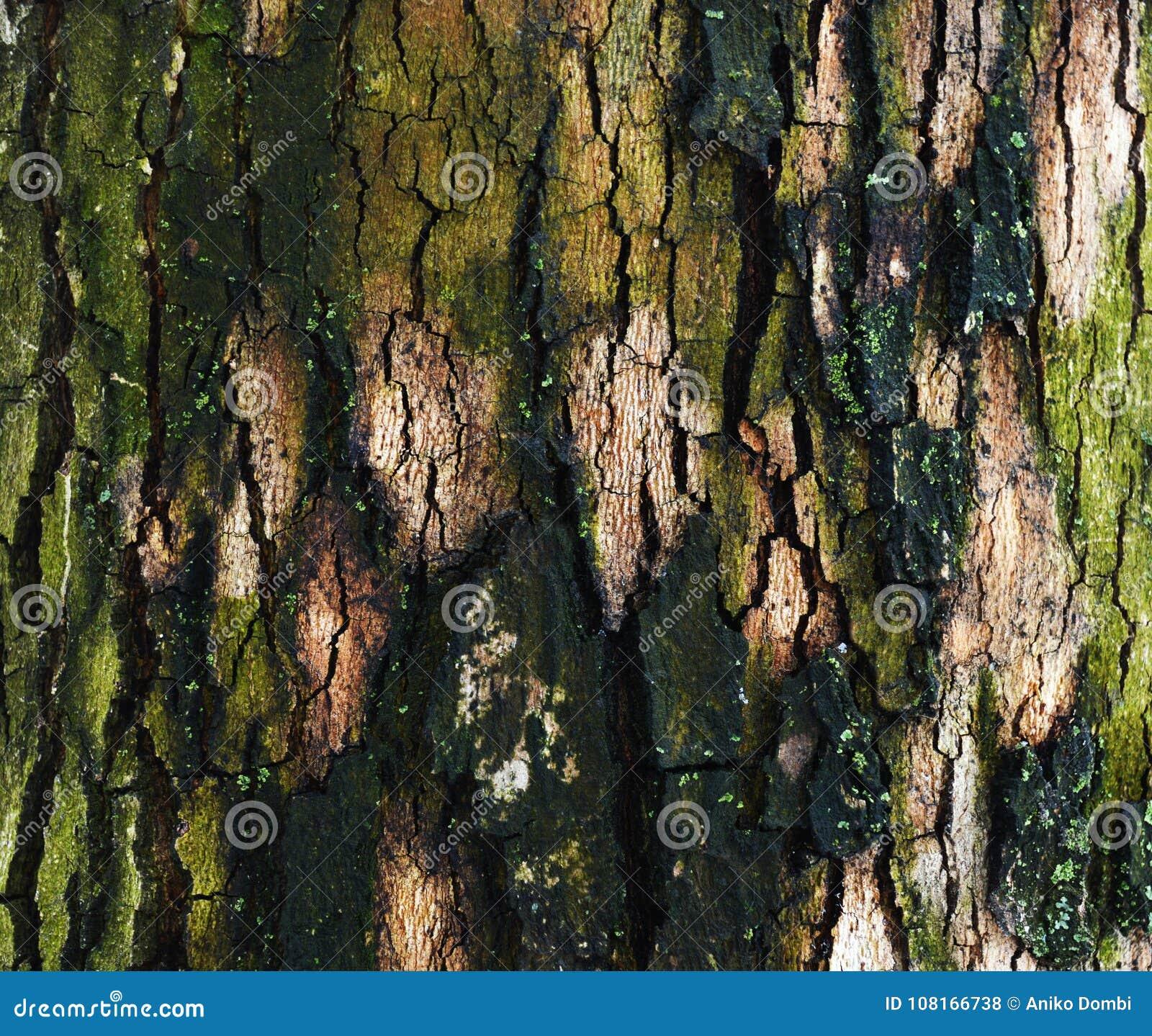 Tronco da árvore para o fundo