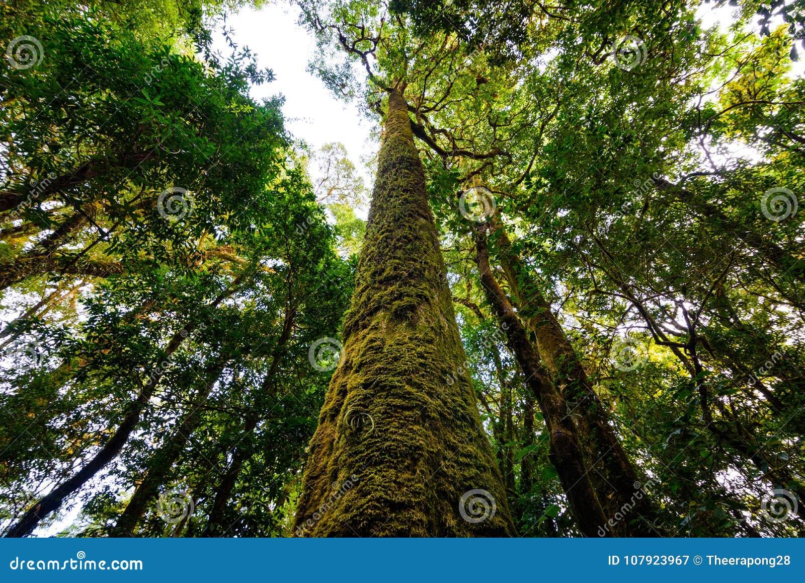 Tronco De árbol Con El Musgo Y La Orquídea En Selva Tropical Bajo ...