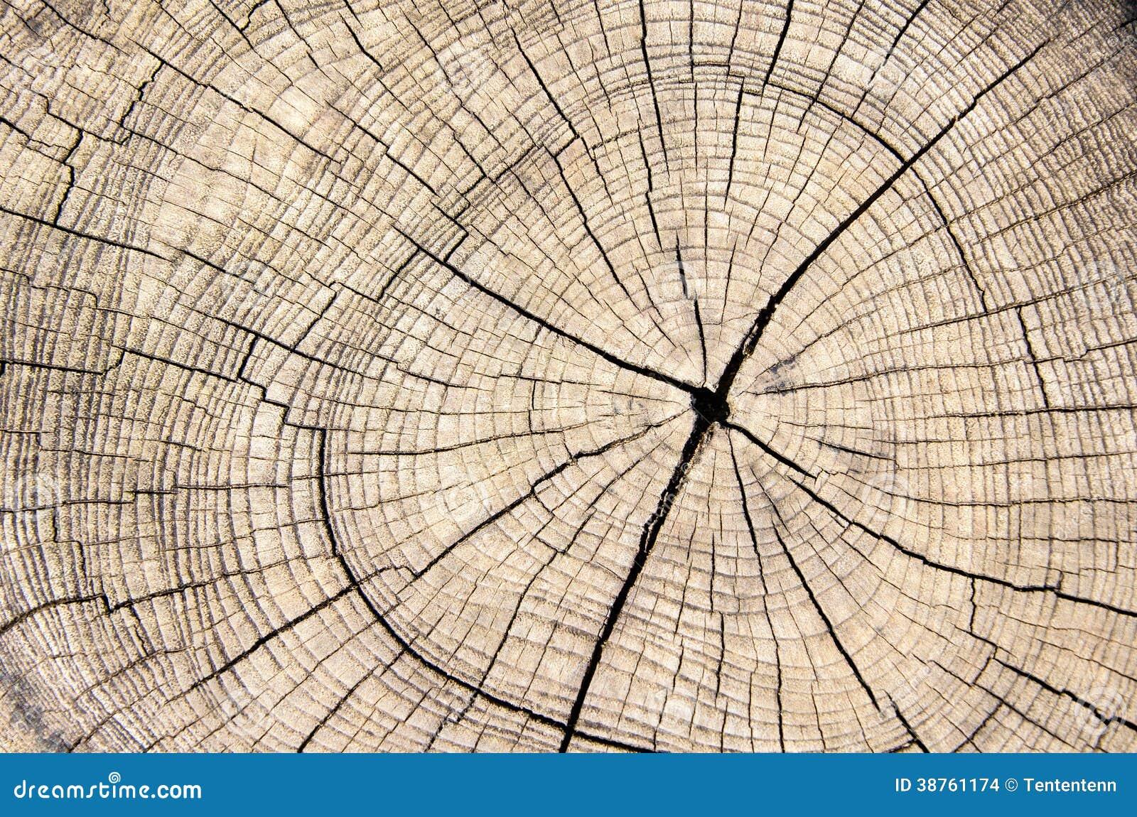 Tronco de árbol de madera del corte de la textura