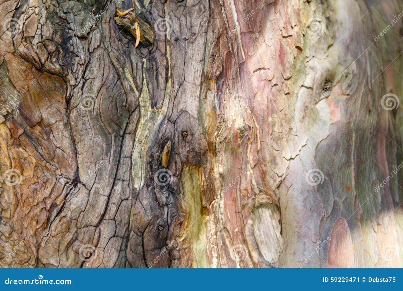 Download Tronco de árbol de pino imagen de archivo. Imagen de rico - 59229471