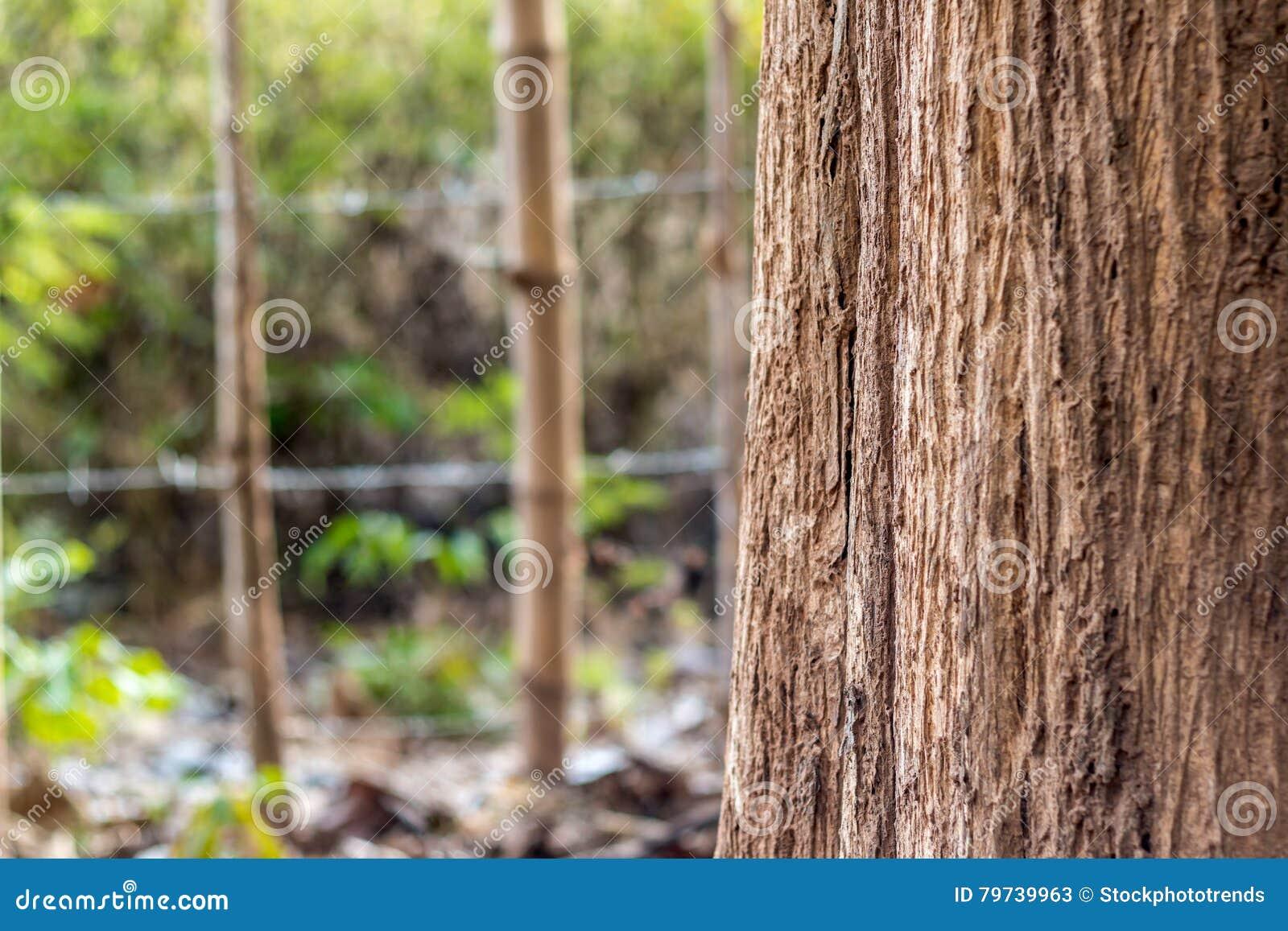 Tronco de árbol Uso de mayo como fondo primer