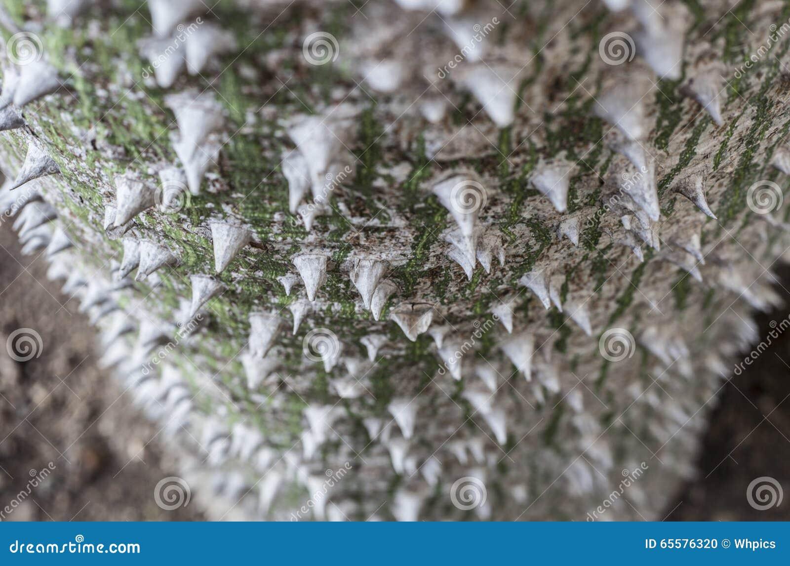 Tronco de árvore de seda branco de Floss