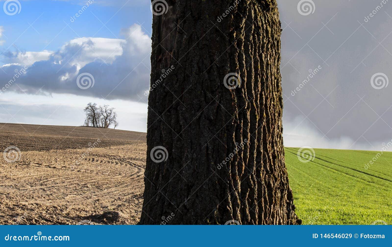 Tronco de árvore no campo