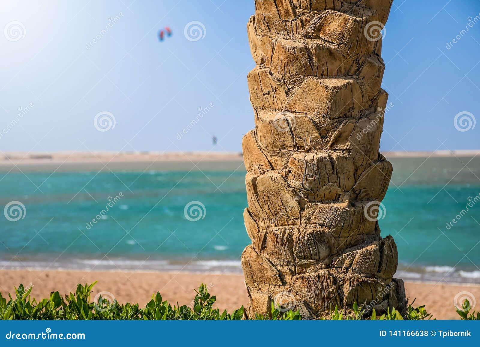 Tronco de palmeira na praia com o surfista do papagaio que salta altamente no céu