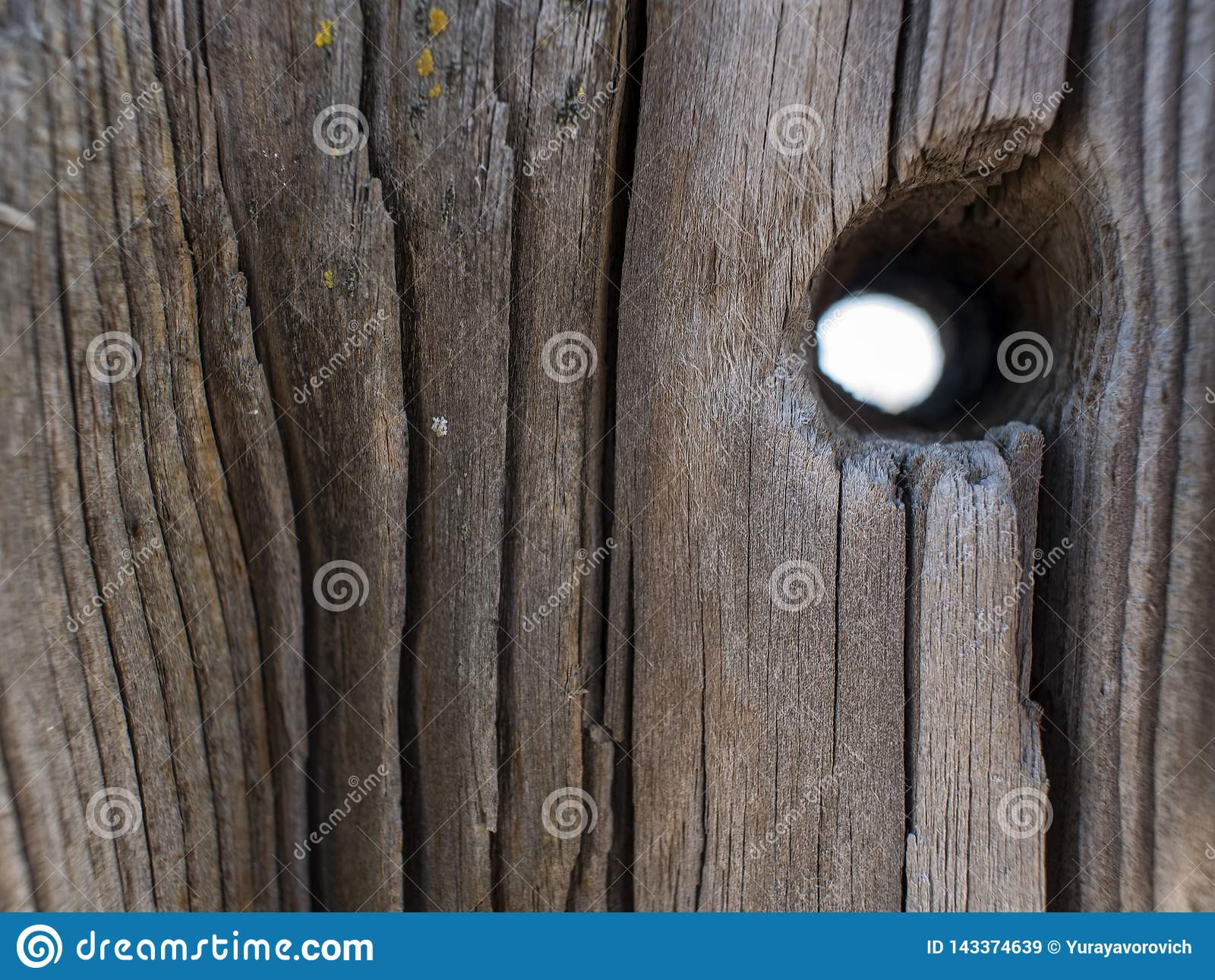 Tronco de ?rvore seco natural bonito com furo Fundo de madeira Textura de madeira